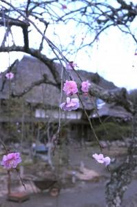 【3月のショップ営業日】